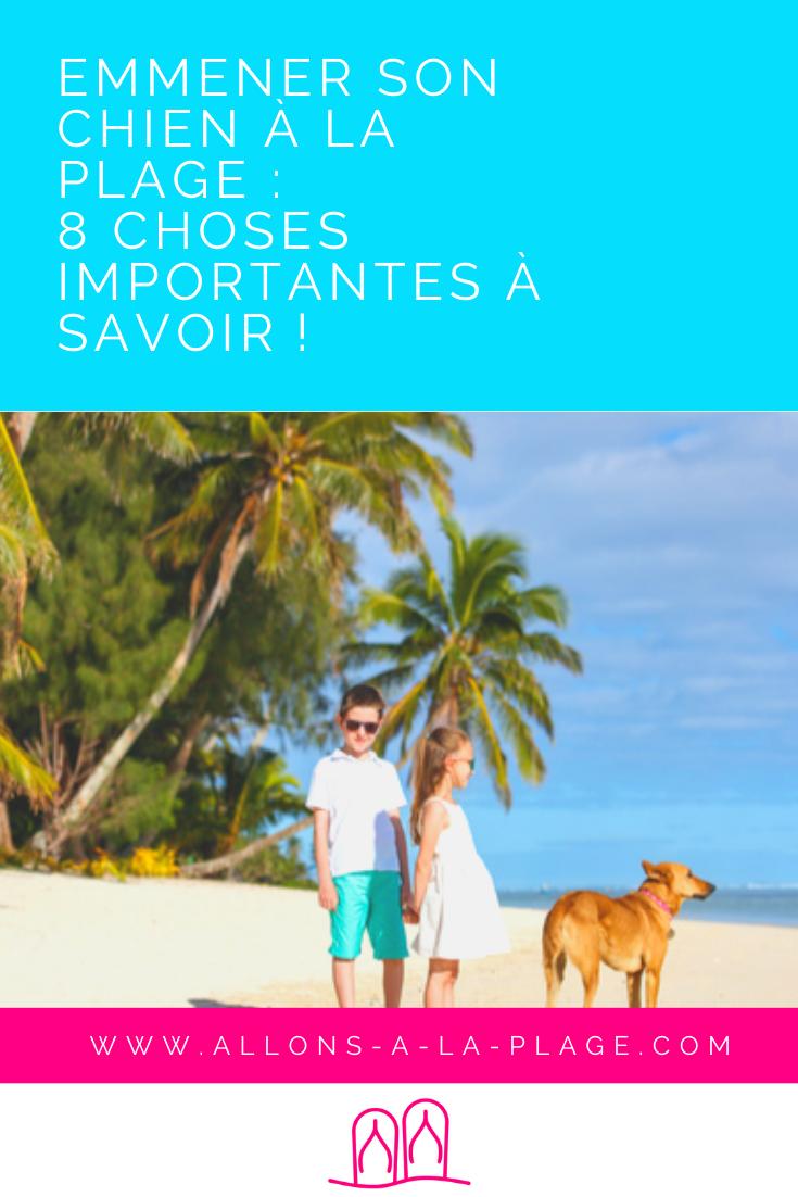 Est-ce compliqué d'emmener son chien à la plage ? Non ! On te donne 8 conseils pour profiter du soleil et du sable chaud avec ton toutou.
